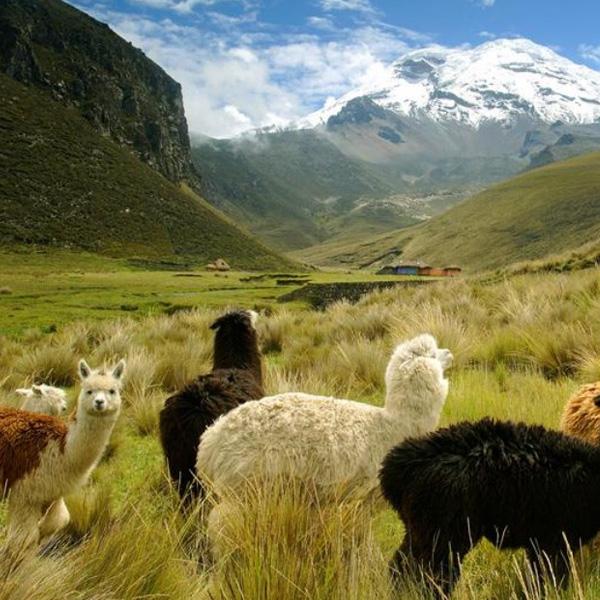 Ecuador solicitará Visa de Turista